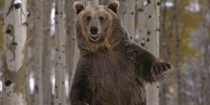 Про медведиков