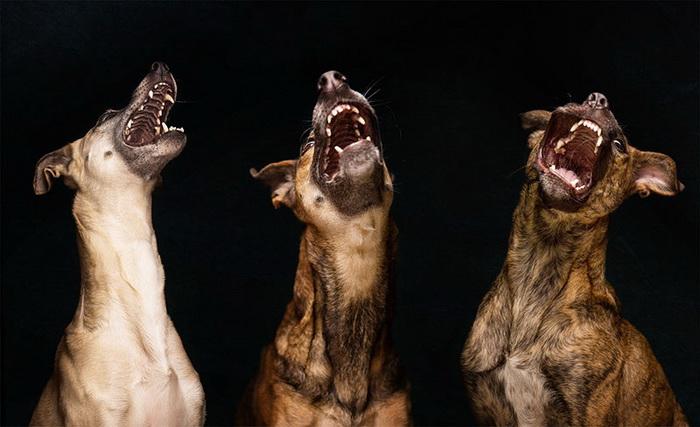 Удивительно смешные собаки