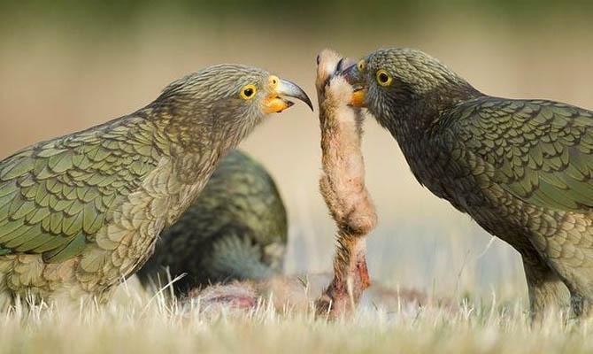 Интересные факты о попугаях + Видео