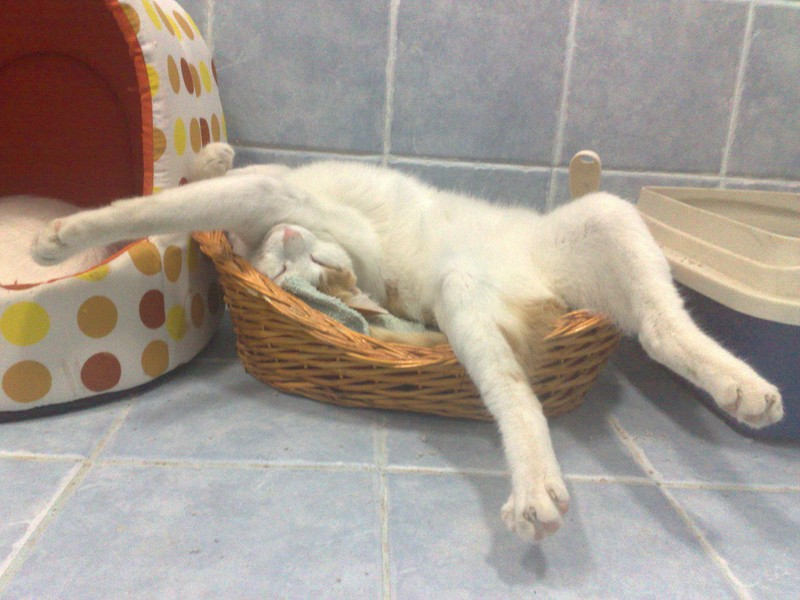 sleepingcats34 Коты, познавшие науку сна