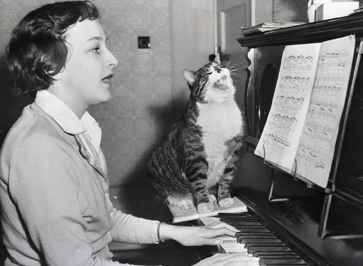 Международный день кота
