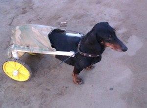 Семья из Камышина соорудила инвалидную коляску для больного пса