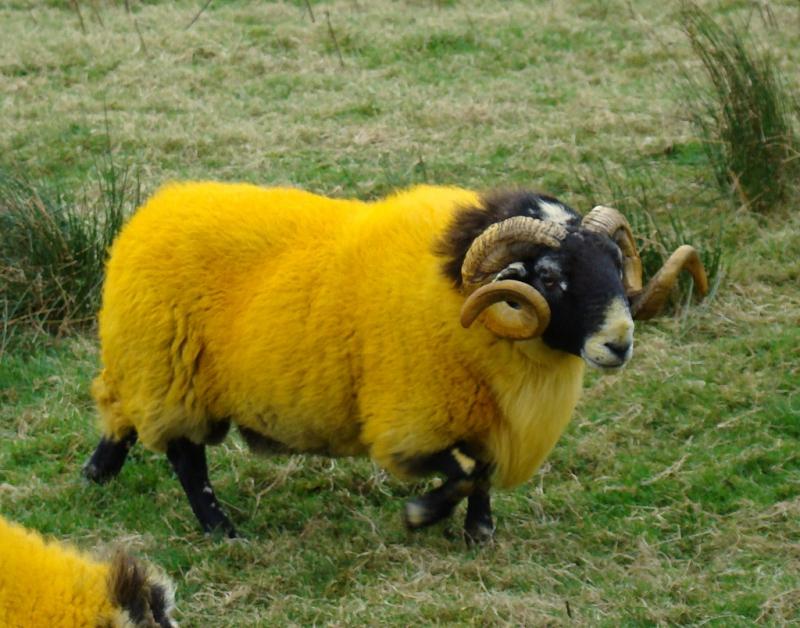 Пёстрые овцы басня, крылов