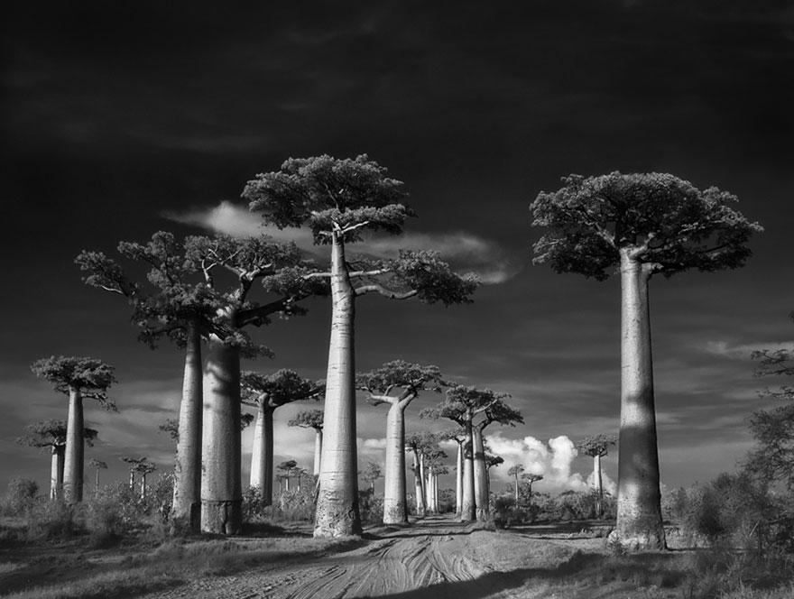 Деревья древние как мир в фотографиях из 14-летнего путешествия-1