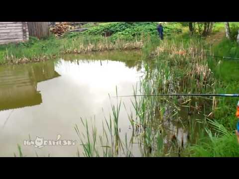 Засада на рыбалке