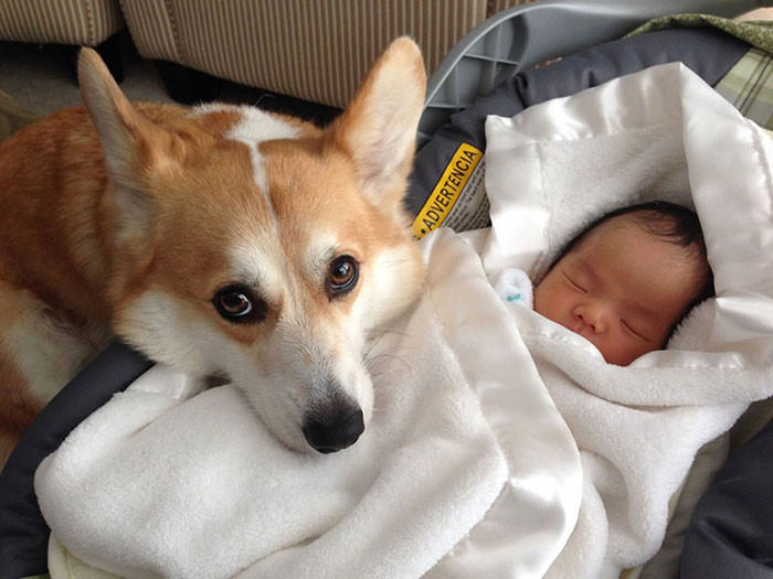 Охрана  дружба, ребенок, собака
