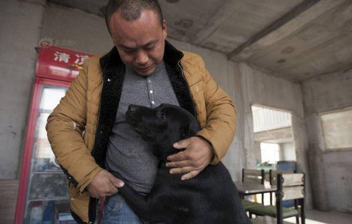 Китайский миллионер потратил свой капитал на бездомных собак