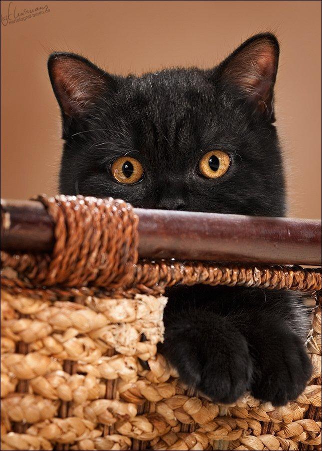 Кошки фотографа Sandra Schurmans