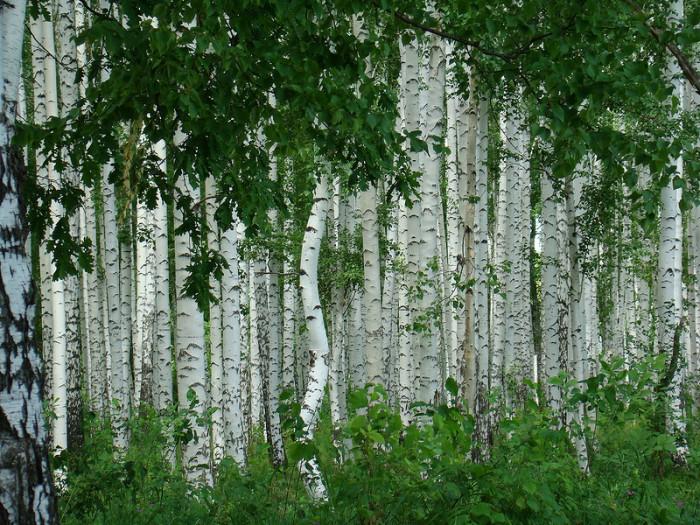 Красота русской природы в фотографиях