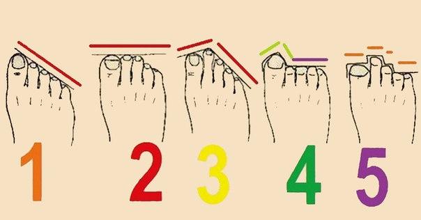 Форма пальцев ног и характер: таких забавных фактов о себе я еще не читал!