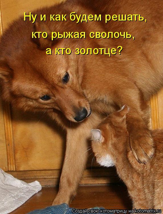 Котоматрица - Ну и как будем решать, кто рыжая сволочь,  а кто золотце?