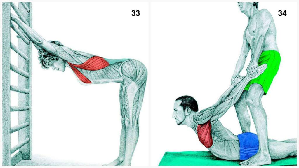 Что Вы тянете на самом деле: растяжка мышц в картинках