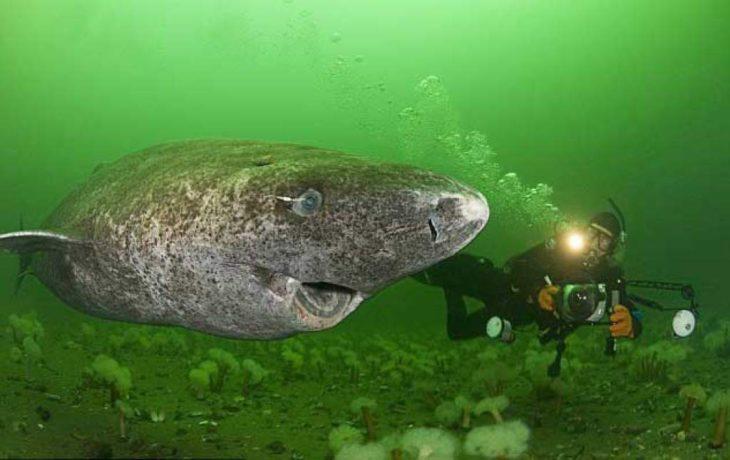 Ученые нашли самоё старое животное в океане