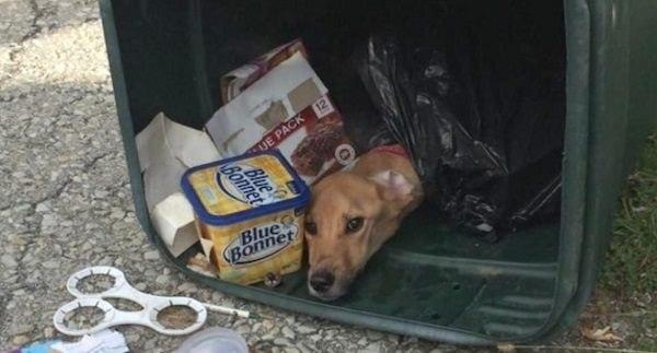 Дворник нашел этого пса, истощенного и заваленного мусором