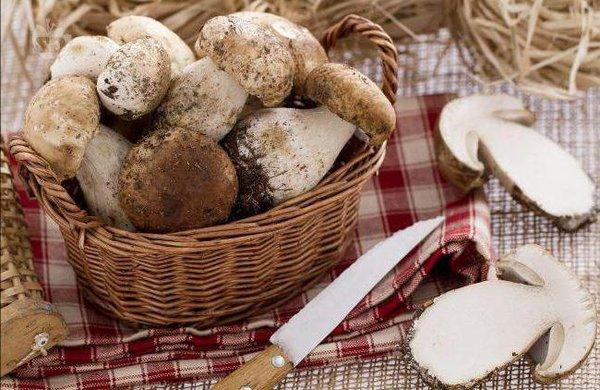 Как подольше сохранить свежие грибы в холодильнике