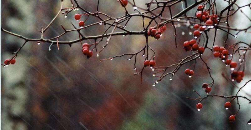 У природы нет плохой погоды...