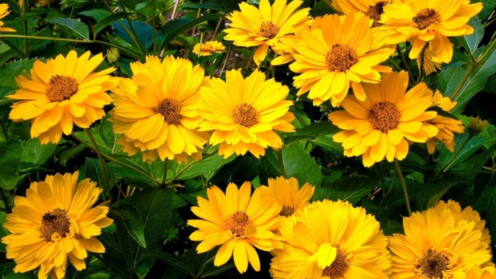цвет, осени 18 (700x393, 387Kb)