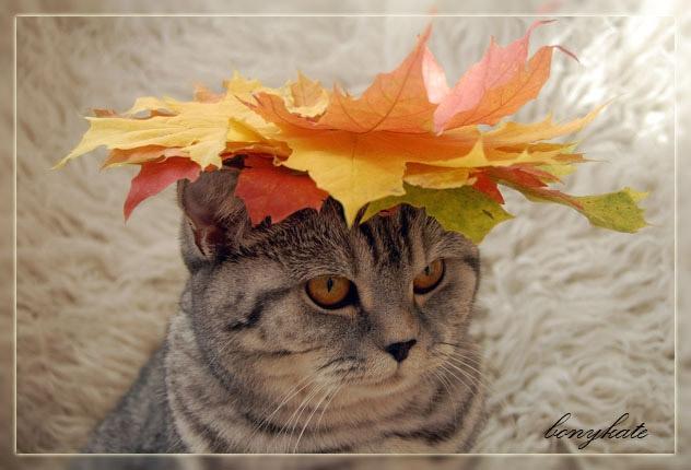 кошки и осень1а (632x430, 154Kb)