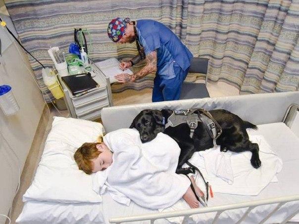 Как мальчик, который ни с кем не разговаривает, лежал в больнице с собакой...