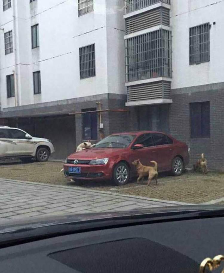 Автоместь от уличных собак