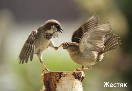Ржачные фото про животных!