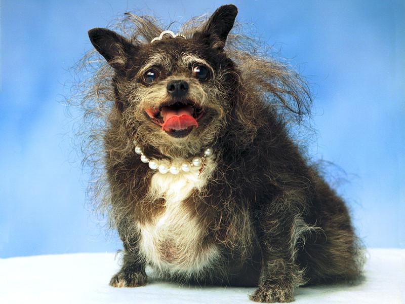 Самые красивые породы собак в мире  топ 10 красивых