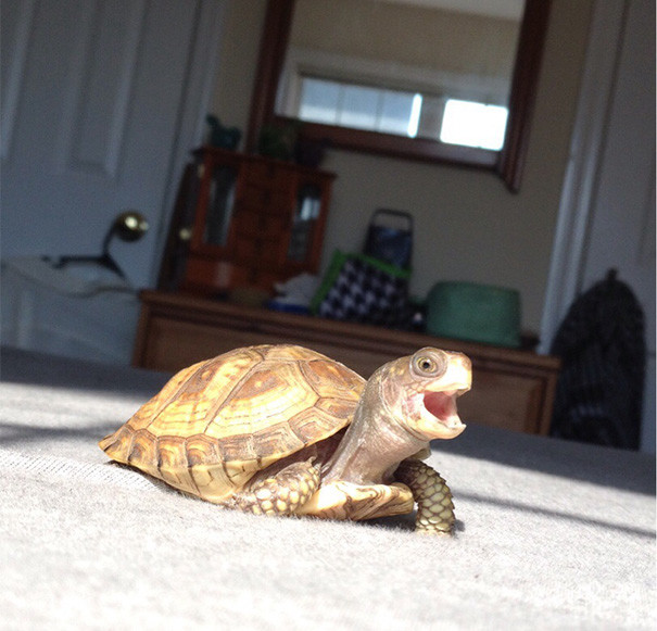 22. Самая счастливая черепаха! ниндзя, питомцы, черепахи