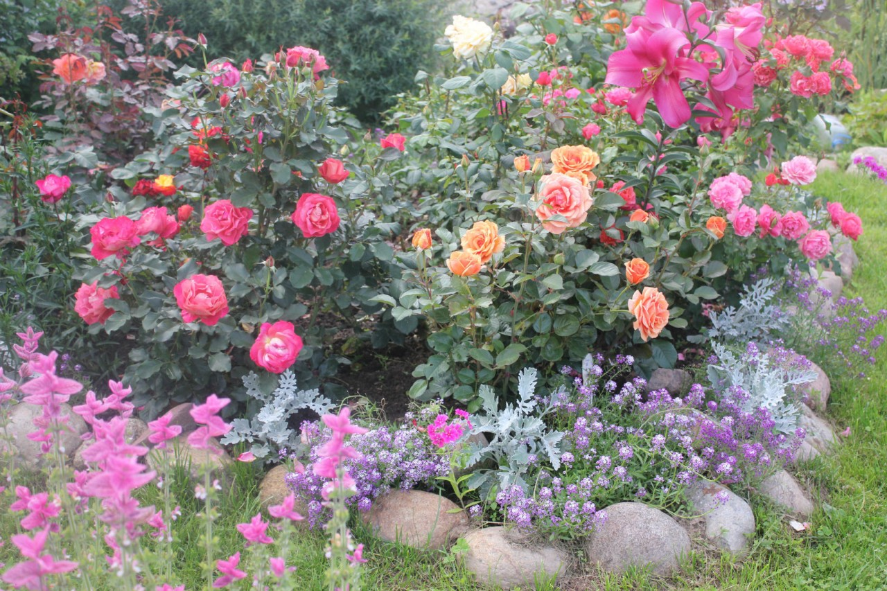 Что можно посадить с розами фото