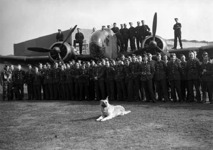 Талисман британских ВВС, гордо позирующий перед фотообъективом.