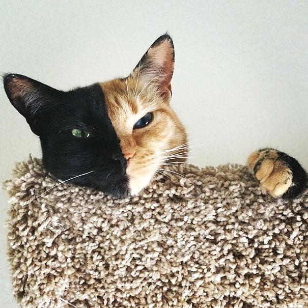 Знакомьтесь, это Венера — кошка с двумя лицами