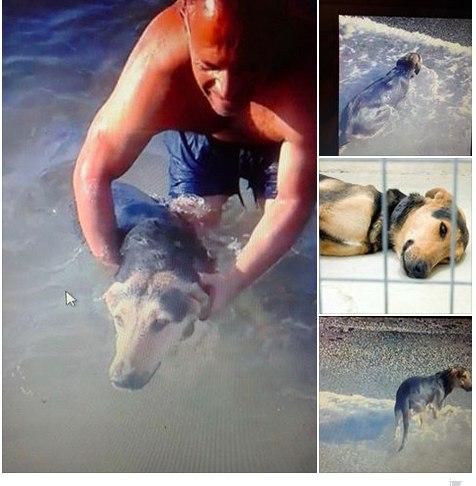 Житель Ираклио вылечил бездомного пса-инвалида