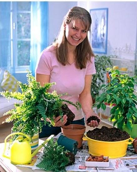 Как сажать комнатные растения 34
