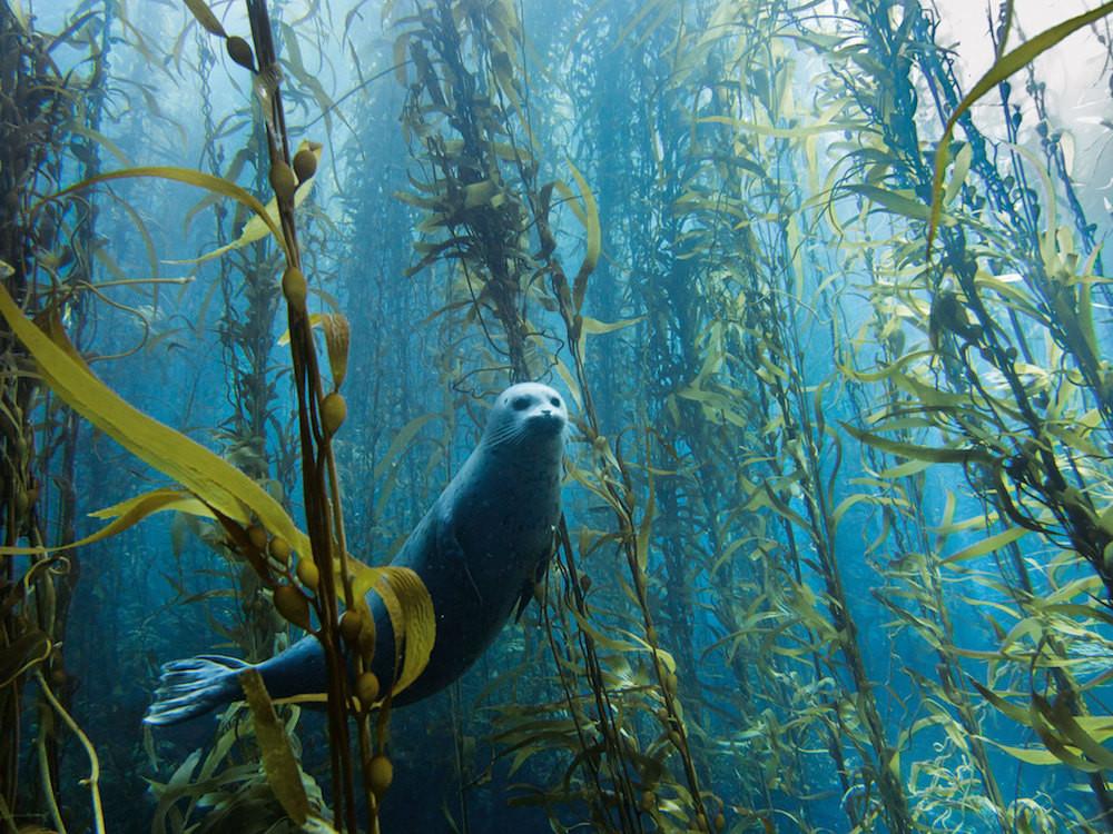 21. Потрясающий подводный лес. люди, мир, удивительные фотографии