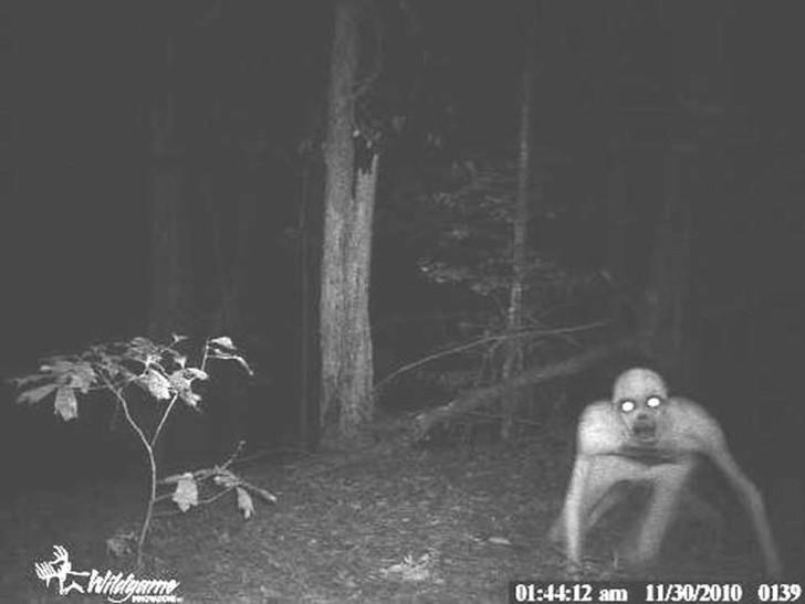 14 самых жутких кадров с охотничьих камер ночного видения