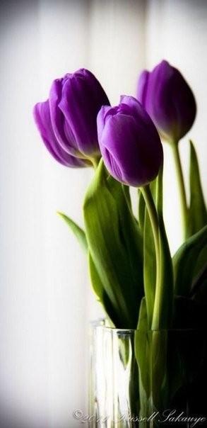 12 апреля - С Днём Рождения!