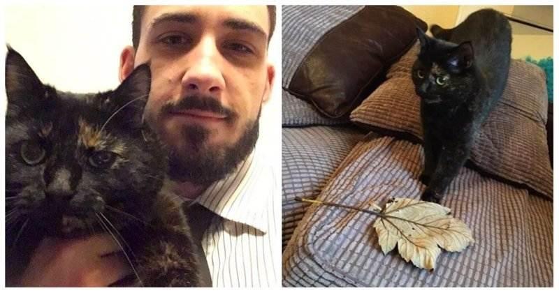 Трогательная история кошки, которая каждое утро приносит хозяину лист по необычной причине