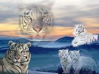 Белые тигры 31