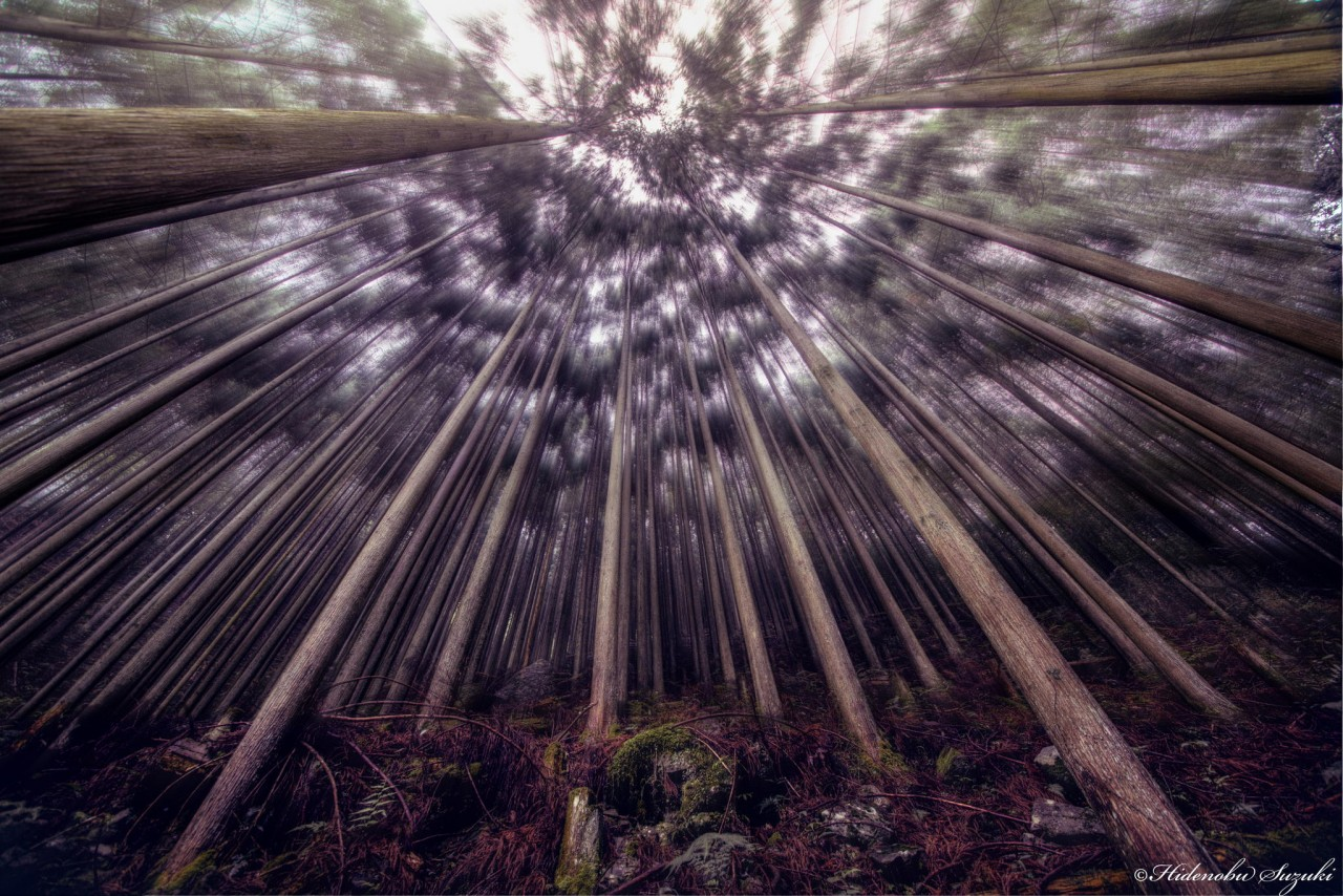 Фотография Seducing woods автор Hidenobu Suzuki на 500px