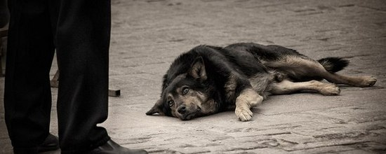 Хозяин бросил умирающую собаку на улице.....