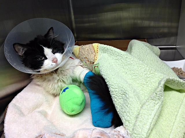 На лечение котенка собрали 13 тысяч долларов