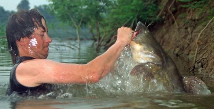 приснилось как ловят рыбу