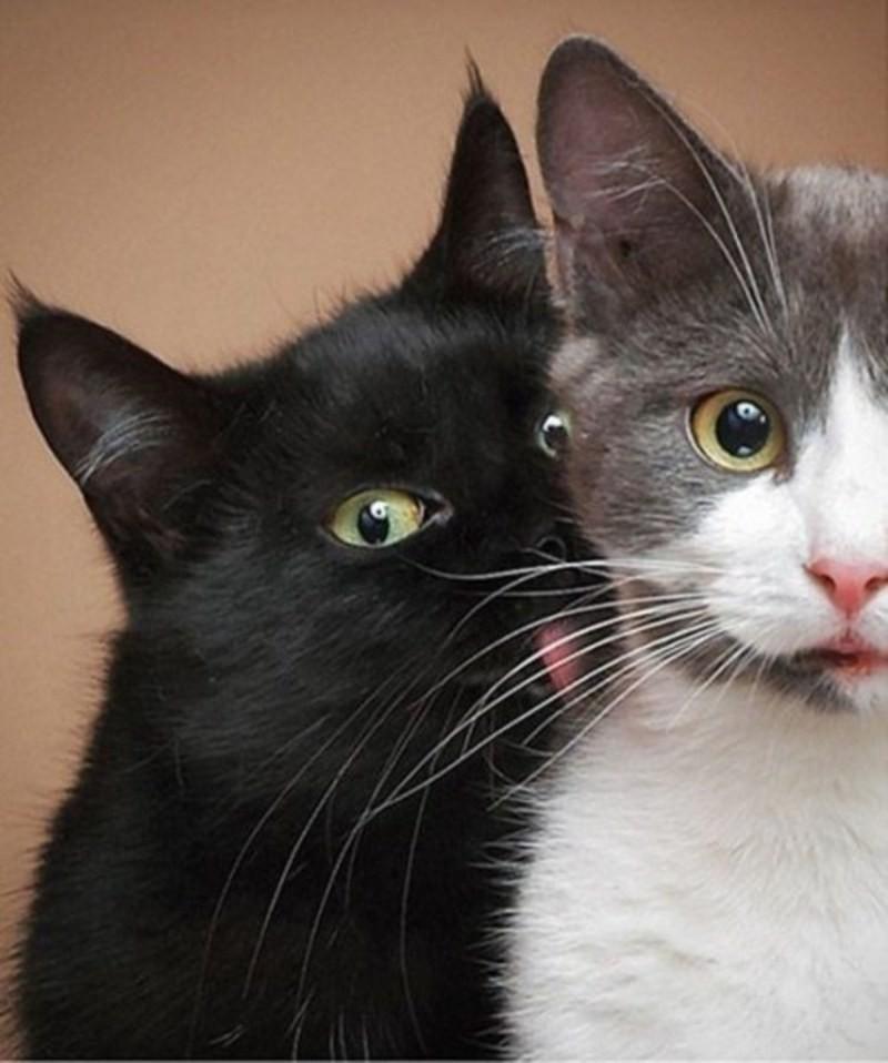 lolcats56 100 лучших фотографий кошек всех времен и народов