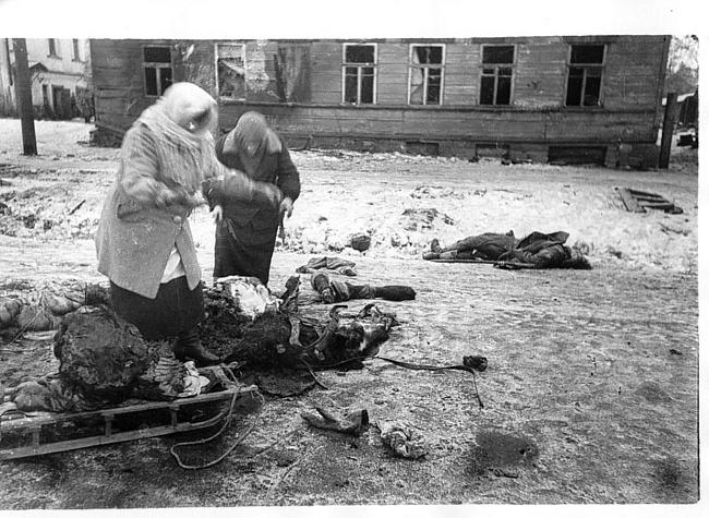 Крысиная война в блокадном Ленинграде