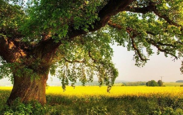 Сила деревьев (604x379, 103Kb)