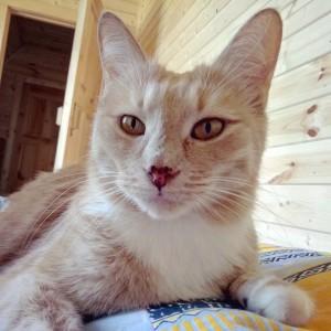 Стресс у кошек и его последствия