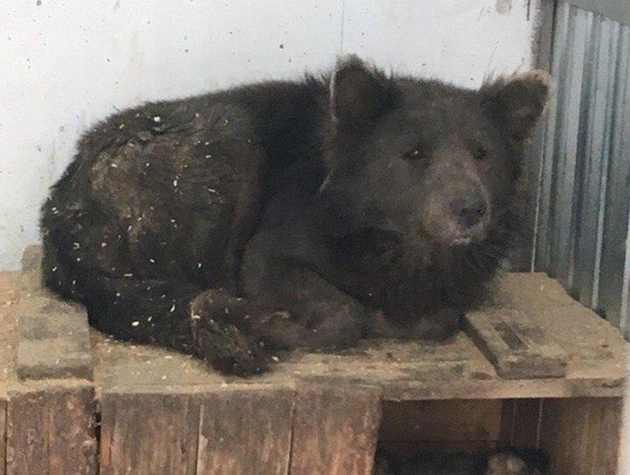 Медвебака — необычный пес из приюта Челябинска