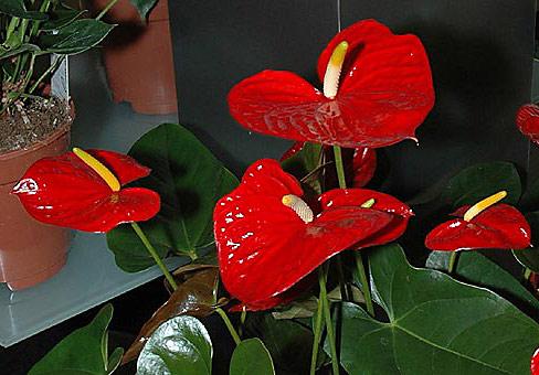 Все виды цветов комнатных с