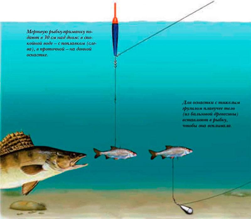 устройства для ловли судака