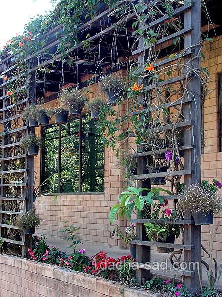 Забор для вьющихся растений своими руками фото7