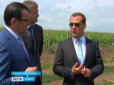 Медведев посетил знаменитые виноградники Крымского района